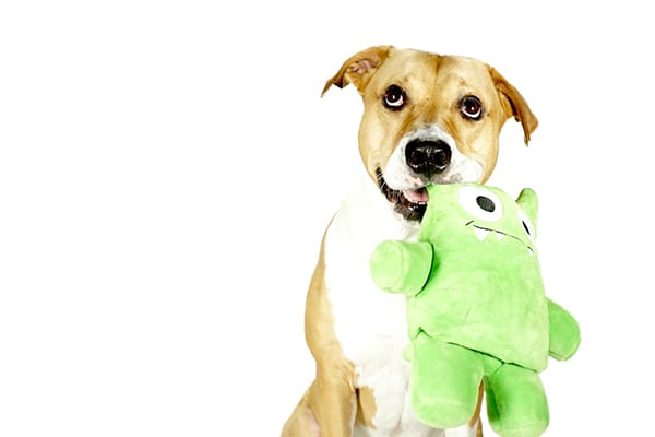 Tearribles-toys-for-dogs
